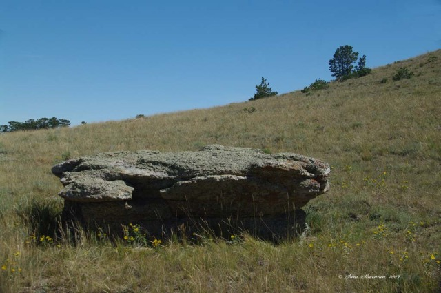 Picnic Rock is a Conglomerate rock