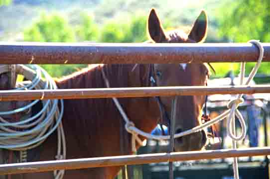 horse head copy