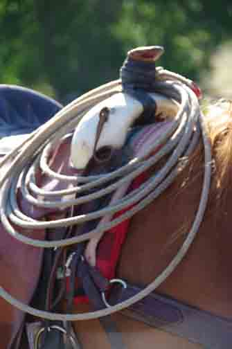 rope on saddle