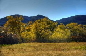 Sidelighted Cottonwood trees along Garden Creek with Casper Mountain in the background.
